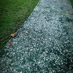 Oyster shell walkway.
