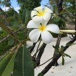 Beautiful island flower