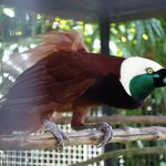"""Don't forget to meet """"John"""", the most human-friendly bird that long for your touch"""