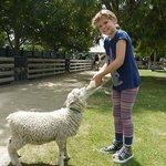 Feeding the lamb it's bottle