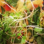 Plant Based Micro Green Bok Choy Salad