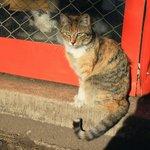 Кошка у дома