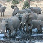 Elefanti visibili dal bar del camp