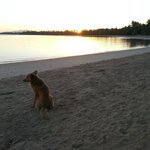 A dog watches the sun rise - on the public beach area