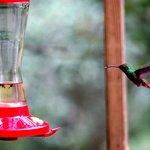 Hummingbird taken from diner area