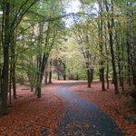 caminho entre as árvores - Slottsskogen