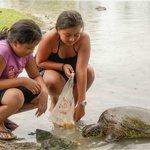 Malua turtle visit.