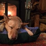 our dog had prime position in front of the woodburner