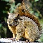 succesful squirrel