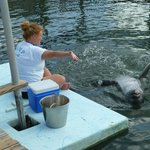 A researcher that we spoke to who was working with one of the dolphins.
