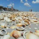 Sandy beach and shells