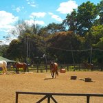 Happy horses in the ring