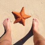 Starfish found on the beach