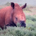 courageous Thandi - who survived horrible poachers