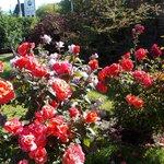 muy linda la entrada llena de flores