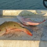 Couple of snappers for the grill