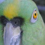 Bogie the parrot