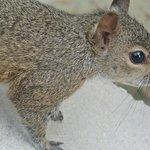Squirrels everywhere