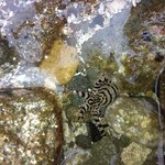 Baby octopus we saw in the tidal pool