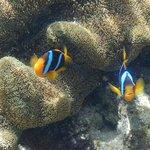 Nimos on Main Reef
