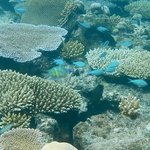 "Nice corals on ""Main Reef"""