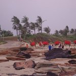 Camels on the beach opposite Resort