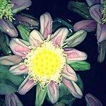 Lotus flower in lobby