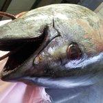 il freschissimo pesce della brasserie mediterranea..