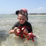 Beach safari collecting starfish and sea urchins