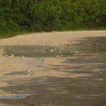Pot holes along beach road