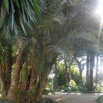 Foto de Plaza y Acera de La Marina