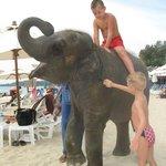 Слона приводят ежедневно
