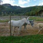 Mrs. & Mr. Donkey