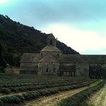 Небольшое лавандовое поле в аббатстве Сенанк