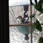 Great bird watching