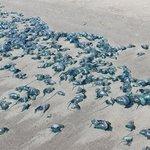Foto de Padre Island National Seashore
