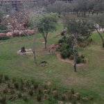Animal View from our Room