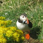 Puffin on Lunga, definitely worth a visit.