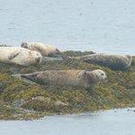 Some sunbathing seals