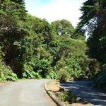 Sendero hacia el mirador del volcán Poas