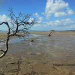 Mangroves on a free ranger walk
