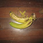 the fruit in our room that the rats ate