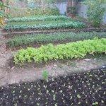 Organic Garden