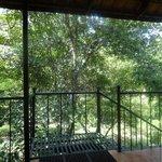 facing the jungle