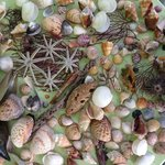 Shells Collected at Beachview Cottages