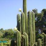 Огромное число кактусов