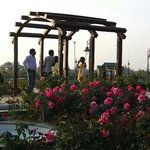 Eco park rose garden