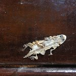 Squashed frog on veranda for 6 days removed on 7th when leaving