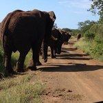 elephants at Thanda