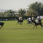 polo on field 1